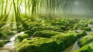 nature landscape water trees forest moss mist stones sun