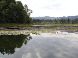 Wetland Resources Of Washington State by Lake Lawrence Noxious Weeds