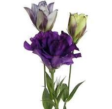 lisianthus flower the purple lisianthus to top our ahem wedding cake our tribe