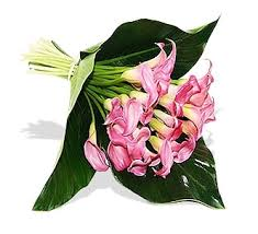 Calla Lily Flower 21 Pink Calla Lilies Flower Delivery Flower Station Florist