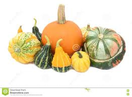 pumpkin festival squash turks turban and ornamental gourds stock