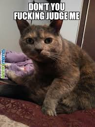 Funny Memes Spanish - awesome funny cat memes spanish daily funny memes