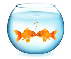 fish bowl fishbowl coloring pages free coloring pages clipart
