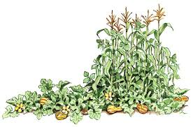 companion planting with vegetables and flowers organic gardening