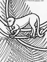 rain forest animals coloring pages kids coloring
