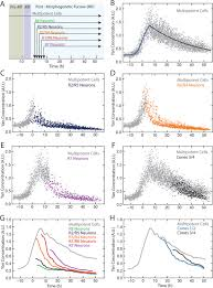 dynamics and heterogeneity of a fate determinant during transition