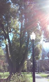 mystery in vacaville california u2013who killed joanna lynn lewis