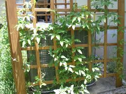 garden design garden design with climbing vines plants for fences