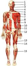 Human Anatomy Quizes Free Anatomy Quiz Muscles Of The Whole Body Locations Quiz 1