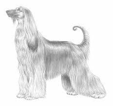 afghan hound national 2014 afghan hound
