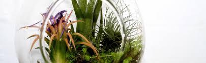 how to plant a bromeliad terrarium bromeliad plant care