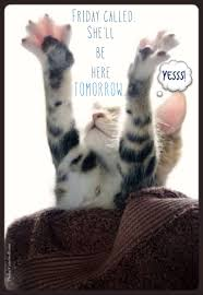 Almost Friday Meme - thursday humor cat funny cute almost friday can t wait for