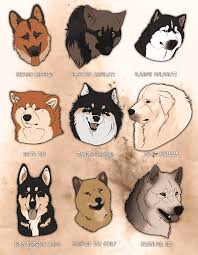 Dog Breeds That Dont Shed Uk by Wolf Like Dog Breeds Pursuing Your Canine U0027s Ancestral Heritage