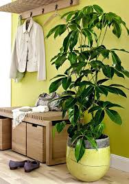 Indoor Plant For Office Desk Best Office Plant No Sunlight Office Plants No Sunlight Desk 19
