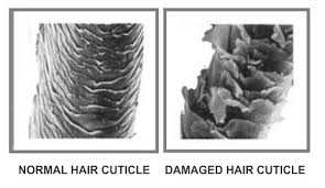 how to take care of the hair cuticle what are ceramides and what do they mean for your hair