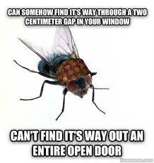 Fly Meme - livememe com scumbag fly