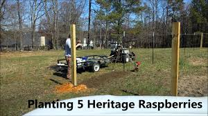 part 2 time lapse building a muscadine grape raspberry