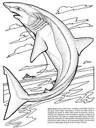 hammerhead shark clipart coloring book pencil color