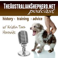 3 4 australian shepherd 1 4 blue heeler what to feed your australian shepherd