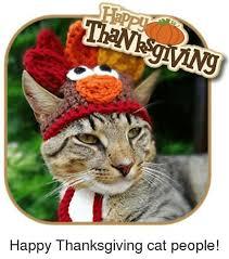 Thanksgiving Cat Meme - th id oip r4tkdyokhf7duzrlxdvp8ahaiy