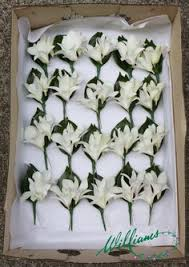wedding flowers for guests white singapore orchid buttonhole d d bridal
