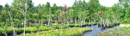 bulk mulch fruit trees berries shrubs trees grasses and