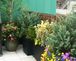 roof garden plants tribeca rooftop garden amber freda home garden design