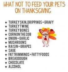 what not to feed your pets on thanksgiving paws pet care