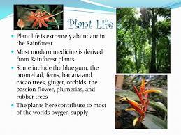 Rainforest Passion Flower - by heather catalanatto ppt video online download