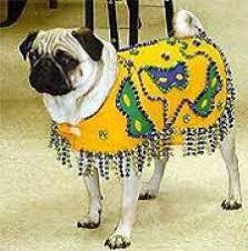 mardi gras dog collars from dog mardi gras costumes dog mardi gras hoodies dog mardi gras