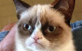 Grumpy Cat Has Died Youtube - how to make millions from your cat telegraph