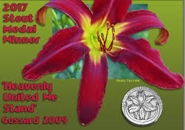day lillies daylilies the american hemerocallis society home page
