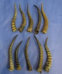horns for sale animal horns for sale and antlers for cabin decor