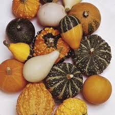 gourd inedible ornamental seeds