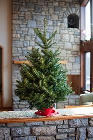 Live Tabletop Christmas Tree With Christmas Decorations Lights by Live Tabletop Christmas Tree App Evergreens