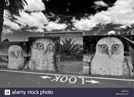 wall mural black and white stock photos images alamy animal and bird and owl mural on concrete flood protection wall in murwillumbah northern new