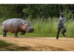 african safari animals jungles in africa afrojungle