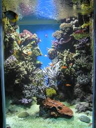 reef aquarium wikipedia