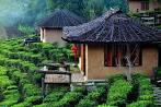ที่นี่เมืองไทย ไร่ชาบ้านรักไทย จังหวัดแม่ฮ่องสอน - ไทย