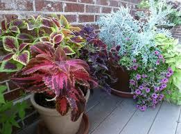Summer Container Garden Ideas Sun Container Garden Plants Ideas Home Inspirations