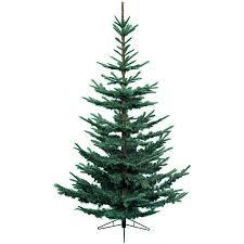 100 nordmann fir christmas tree care where to buy christmas