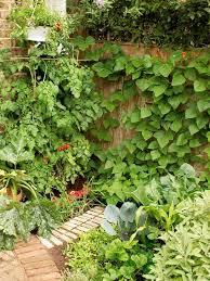 designing a courtyard vegetable garden hgtv