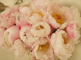 matrimonio fiori i fiori piu belli per un matrimonio silviadeifiori