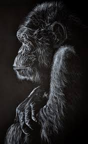 another animal drawing on black paper a u0027thinking u0027 chimpanzee