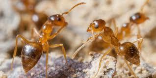 Ants In Backyard Of Ants The Field Museum