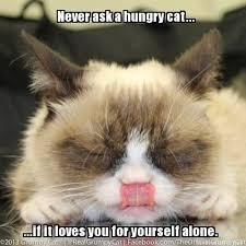 Tardar Sauce Meme - 198 best tardar sauce grumpy cat images on pinterest cute kittens