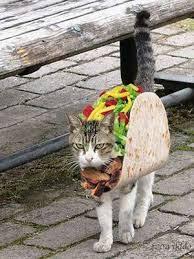 Funny Halloween Animal Costumes 25 Cat Costumes Ideas Cute Cat Costumes
