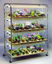 african violet grow light this type of light stand is perfect for growing african violets and