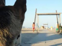 bagno per cani spiagge per cani ferrara e stabilimenti balneari con