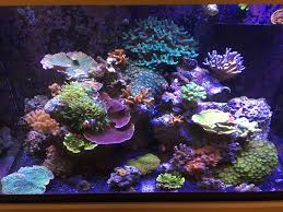 Reef Aquarium Lighting Reviews Of Sb Reef Lights Page 3 Reef2reef Saltwater And Reef